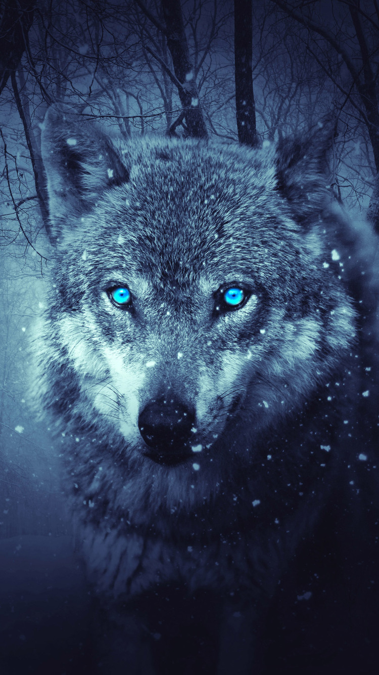 Wolf Iphone 6 Wallpaper Hd Archidev