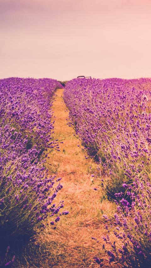 farm-field-flora-flowers-scenery-5k-yb.jpg