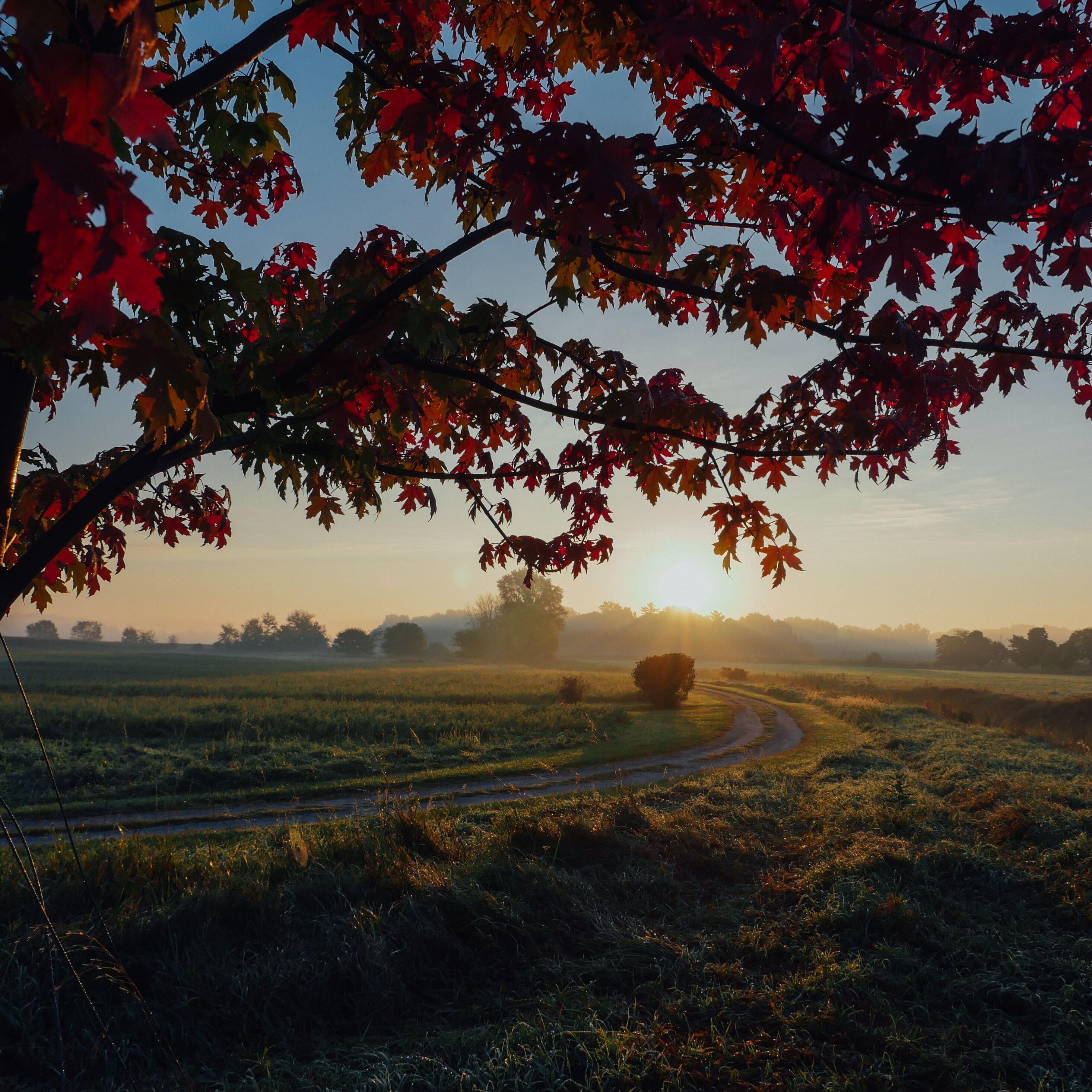 farmland-autumn-trees-5k-2h.jpg