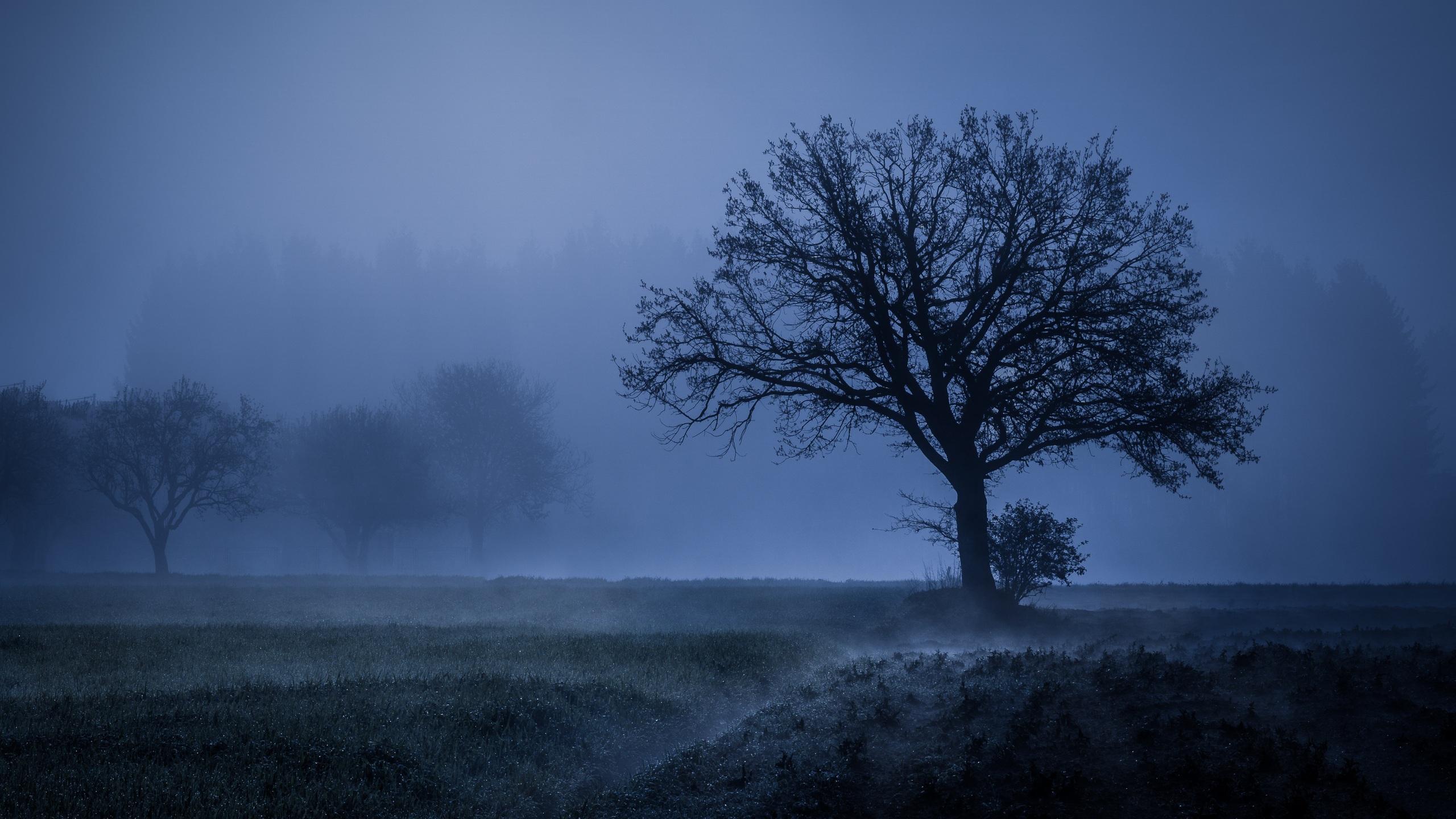 Field Fog Trees Blue Weather Cold 4k 5k