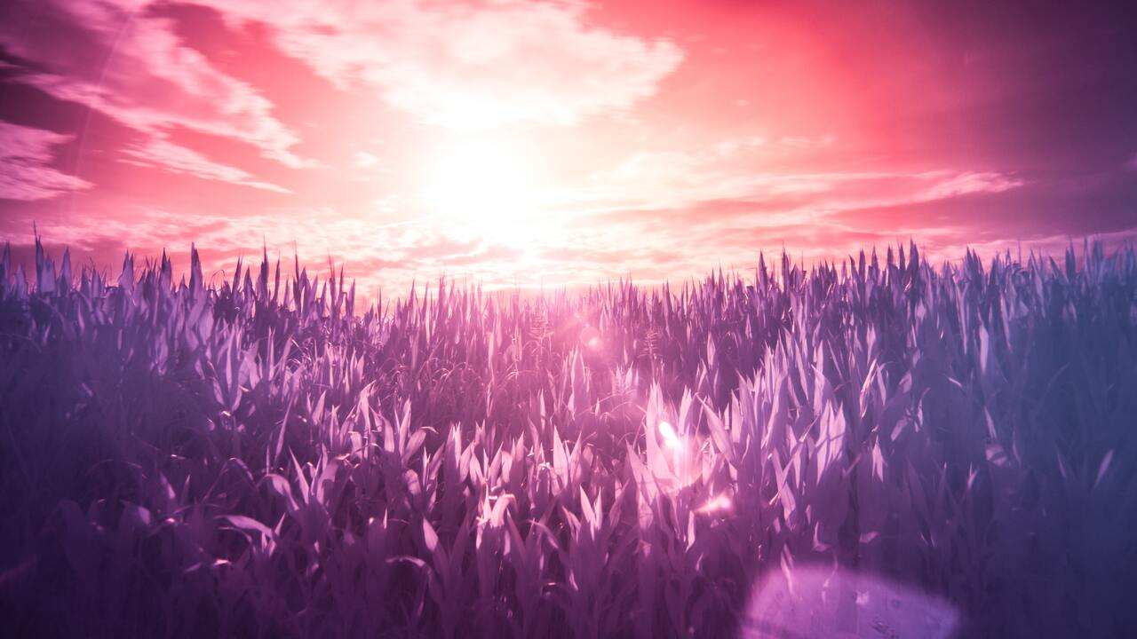 field-scenery-5k-4d.jpg