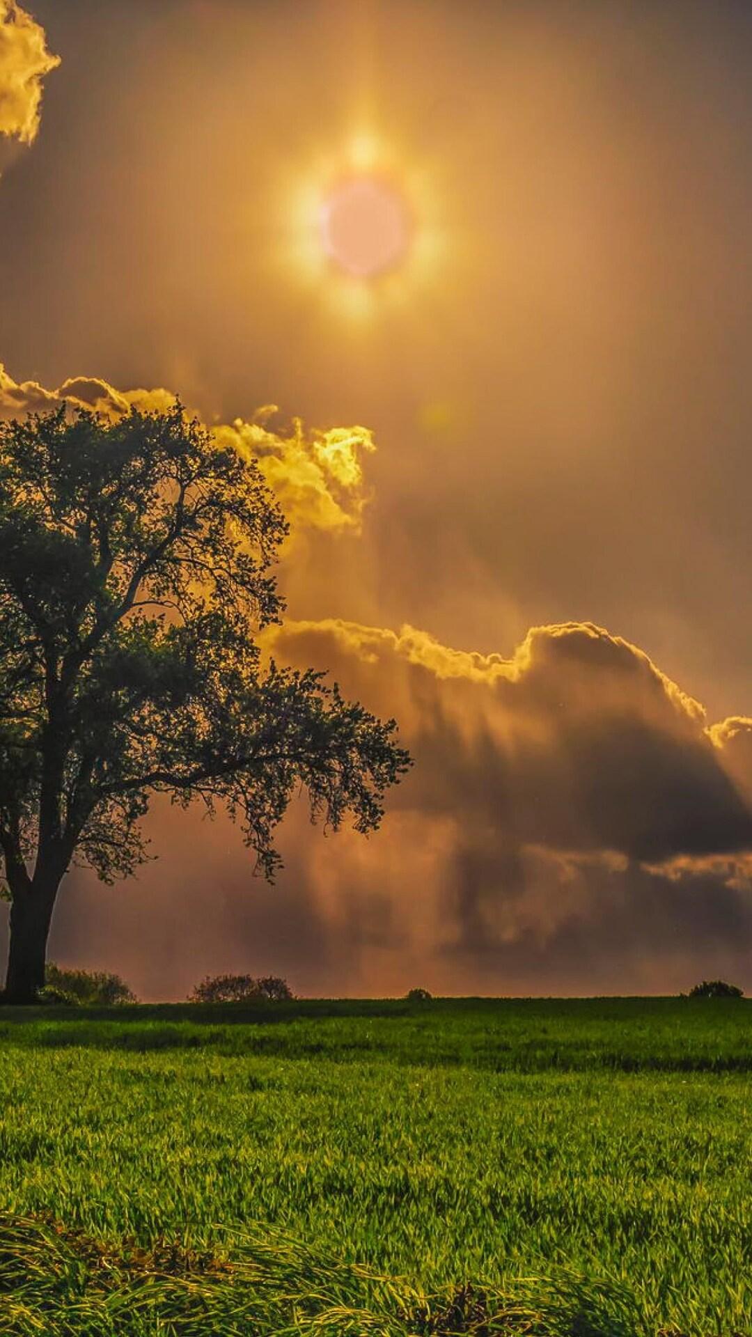 field-trees-grass-sky.jpg