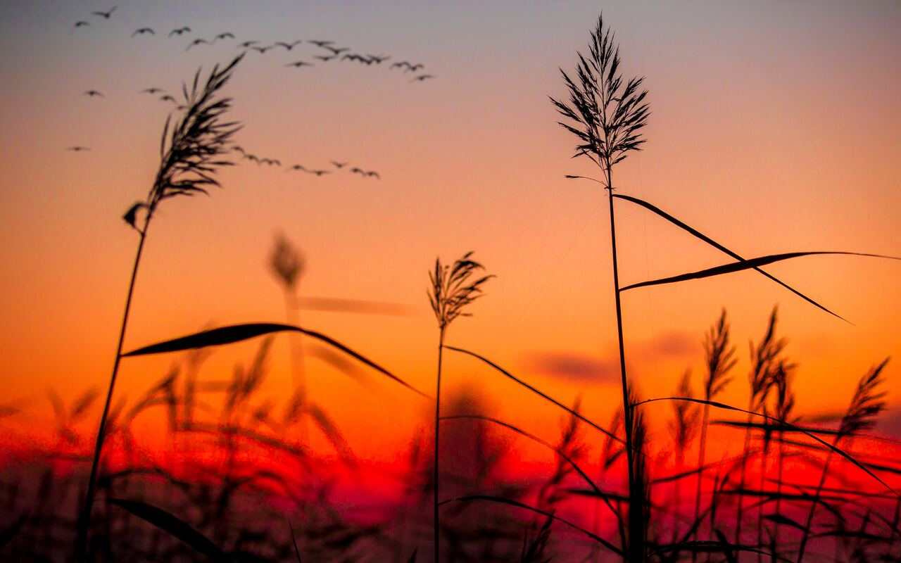 field-weeds-sunrise-ib.jpg