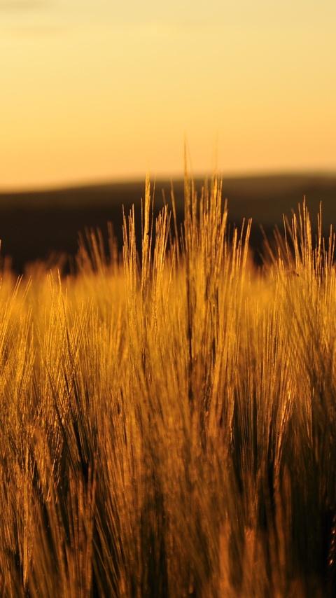 fields-nature-4k-1n.jpg