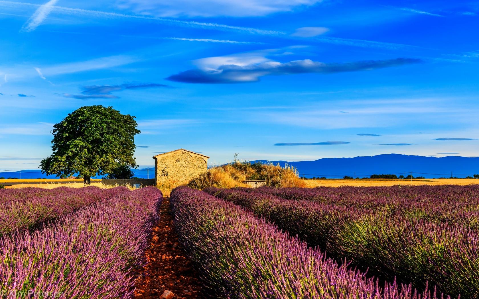 fields-nature-image.jpg