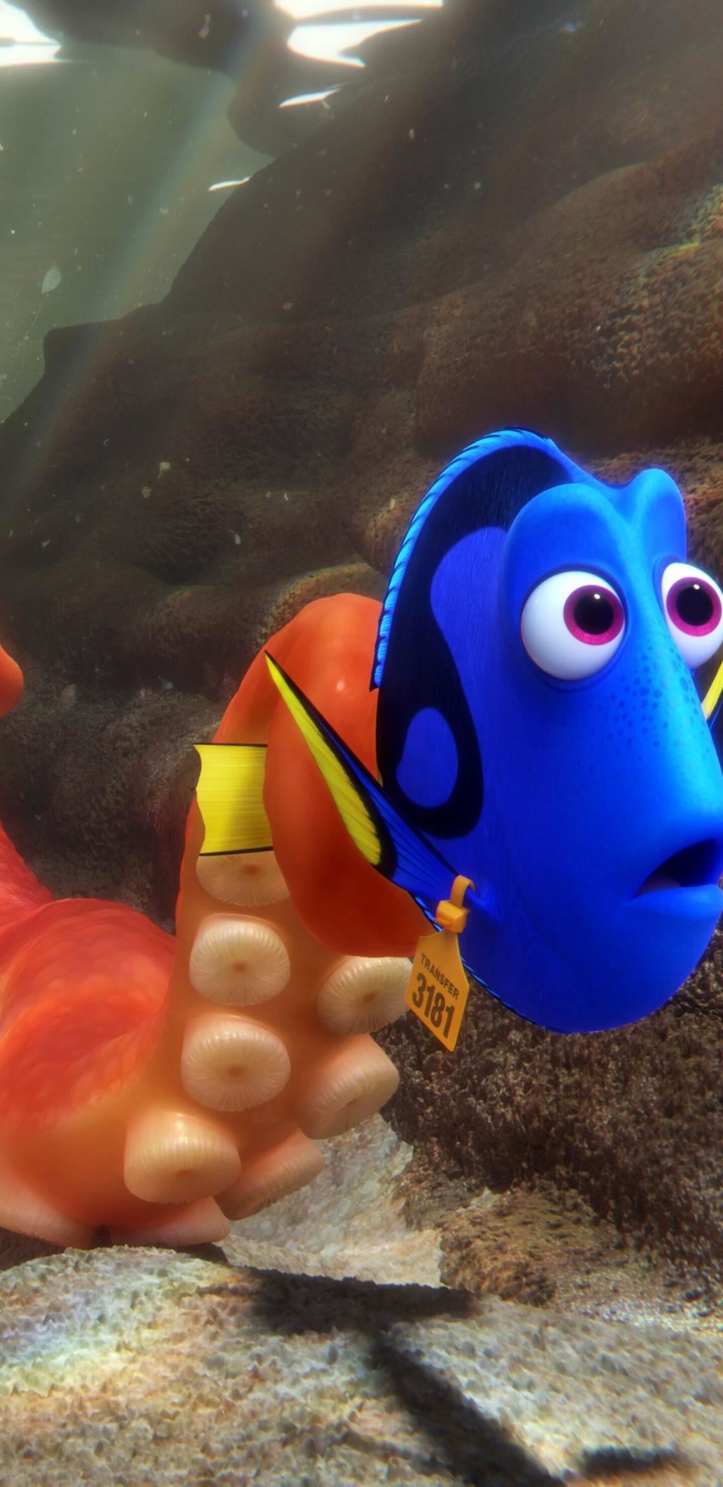 1440x2960 Finding Dory 2016 Samsung Galaxy Note 9 8 S9 S8 S8 Qhd Hd 4k Wallpapers Images Backgrounds Photos And Pictures
