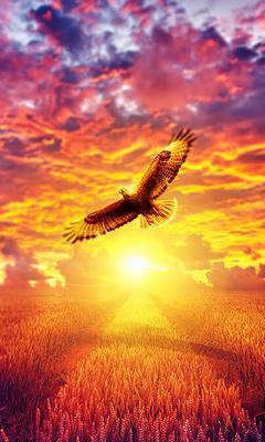 flaming-eagle-golden-hours-4k-06.jpg