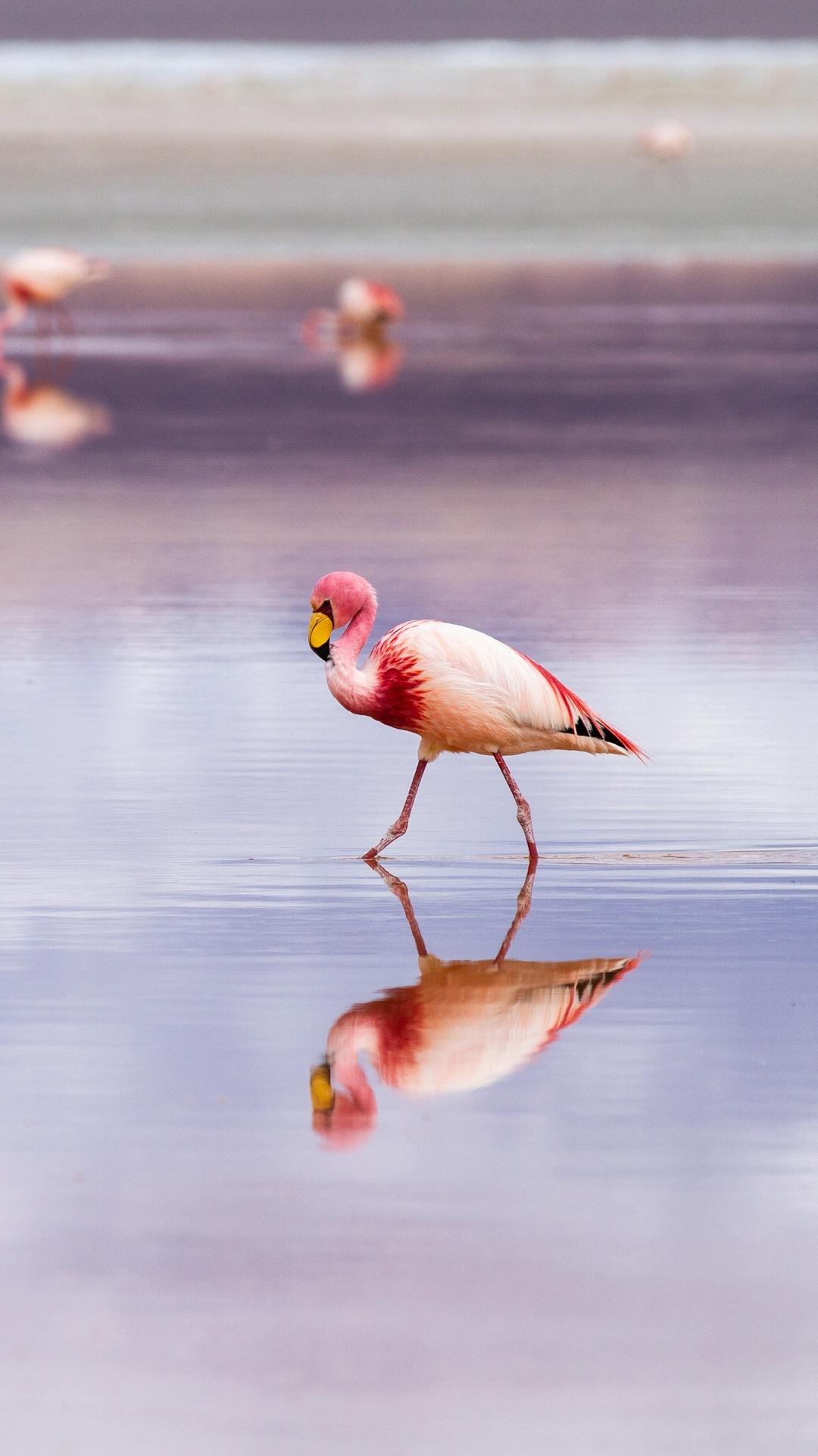 flamingo-zf.jpg