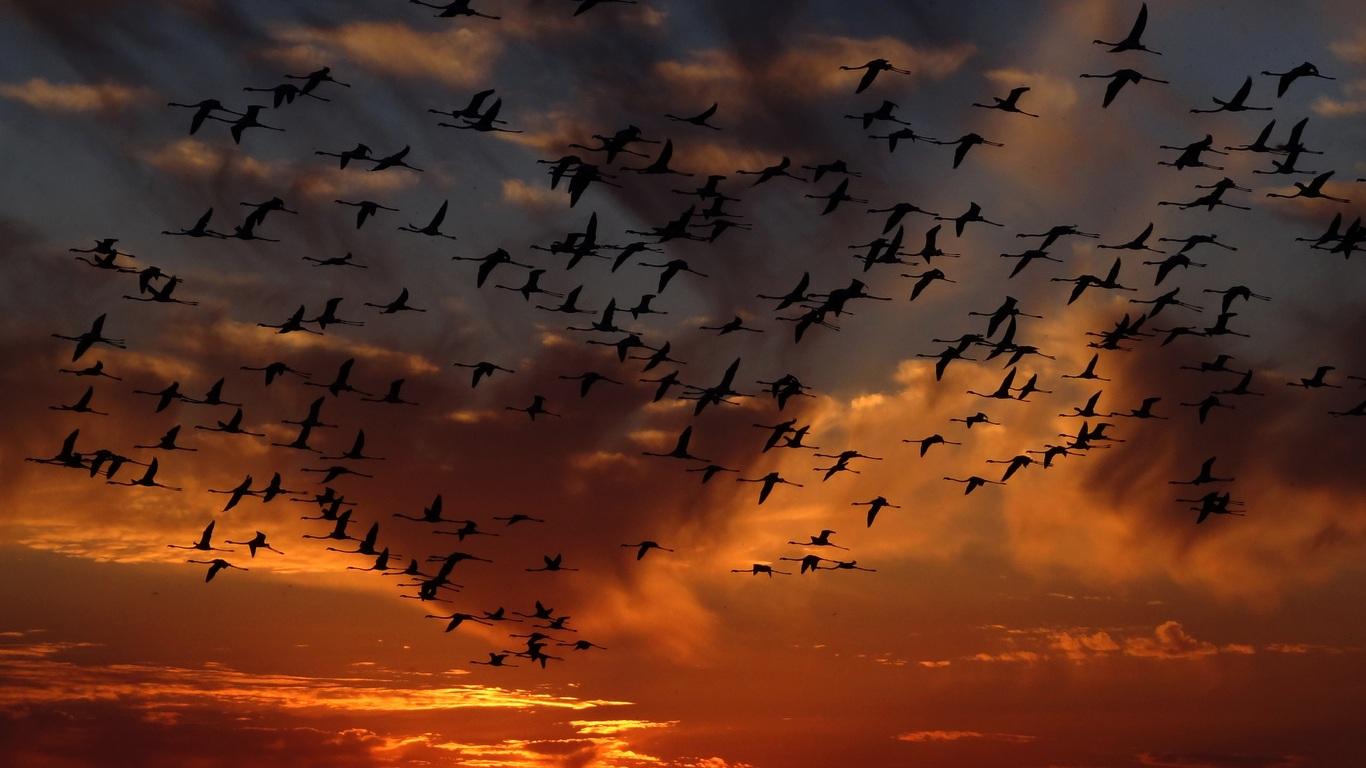 flamingos-flight-4k-tf.jpg