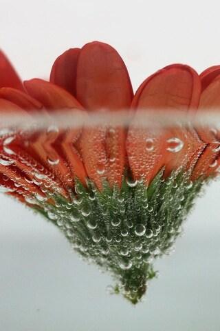 floating-flowers-4k.jpg