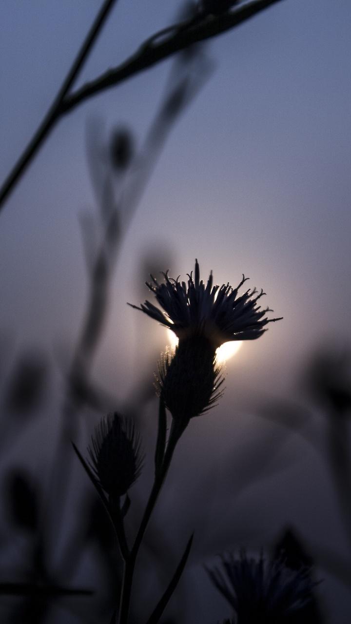 flora-flower-focus-blur-5k-qn.jpg