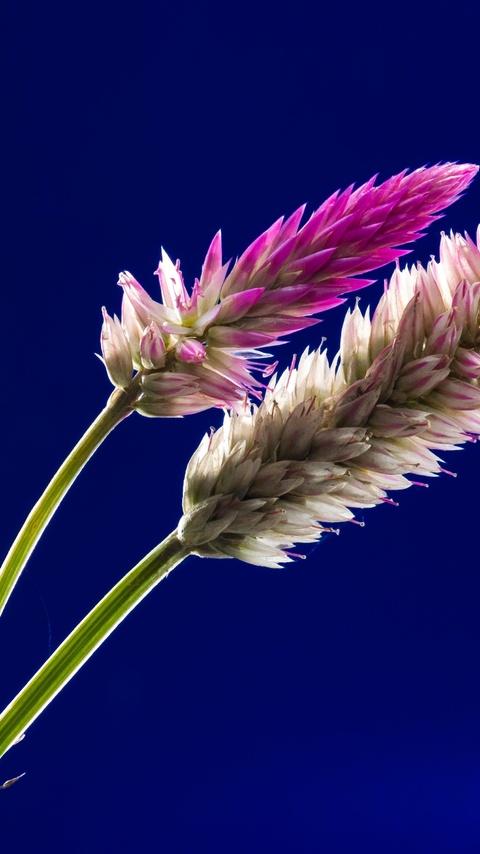 flora-flowers-stock-4k-5q.jpg
