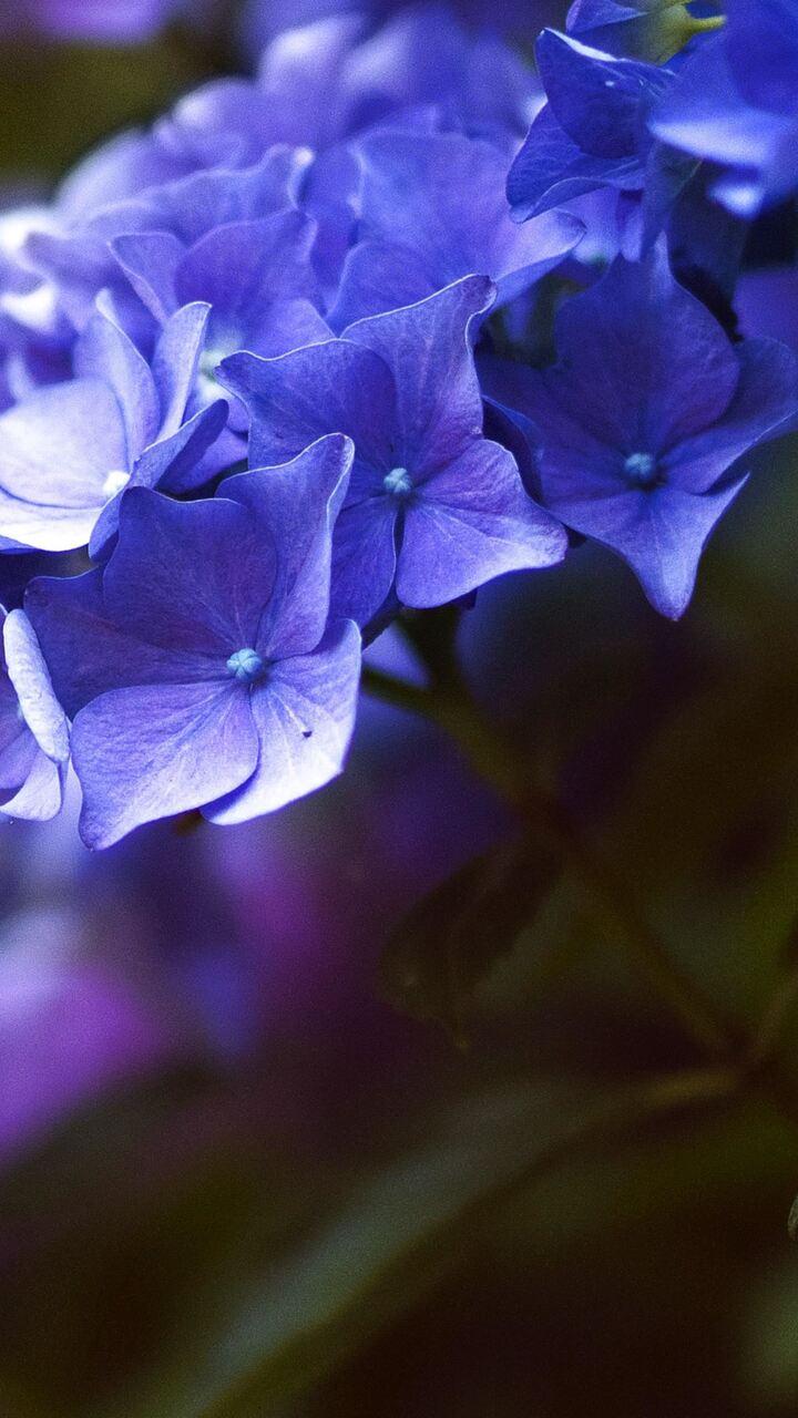 flower-4k-new.jpg