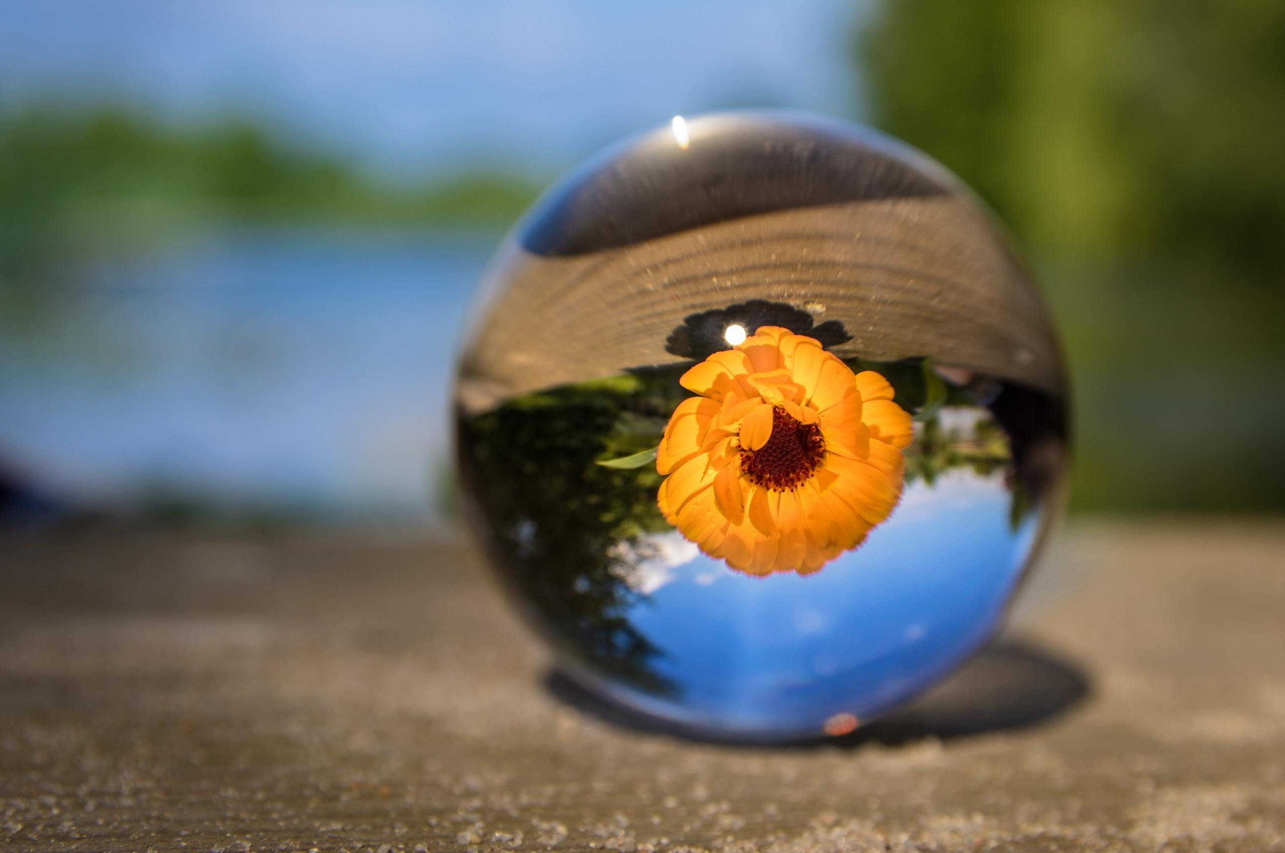 2560x1700 Flower Ball Chromebook Pixel Hd 4k Wallpapers Images