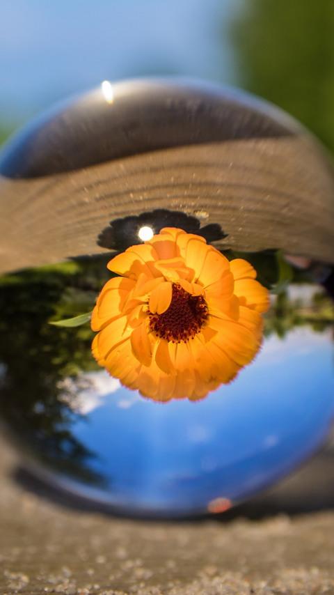 flower-ball-hd.jpg