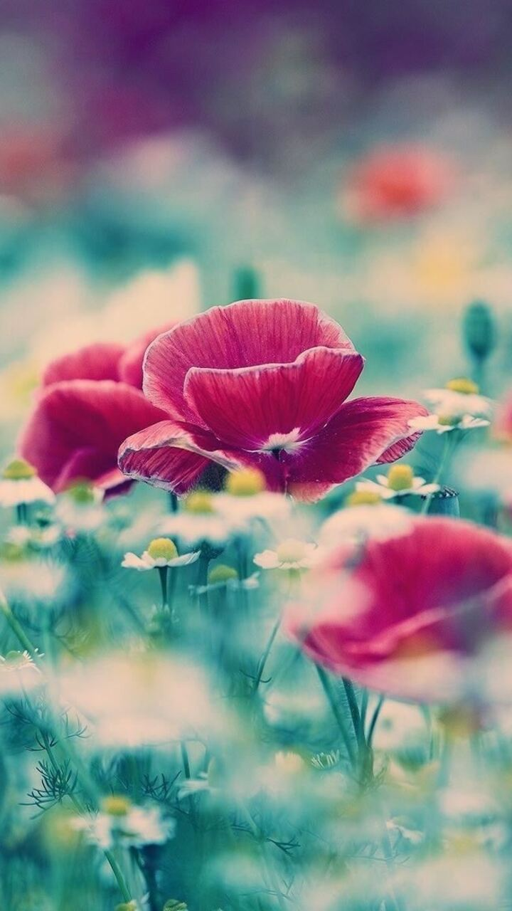 flower-blur-ap.jpg
