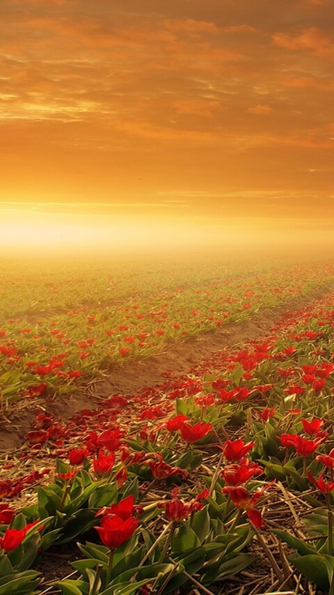 flower-fields-nature.jpg
