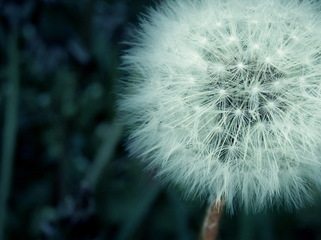 flower-fluff-macro.jpg