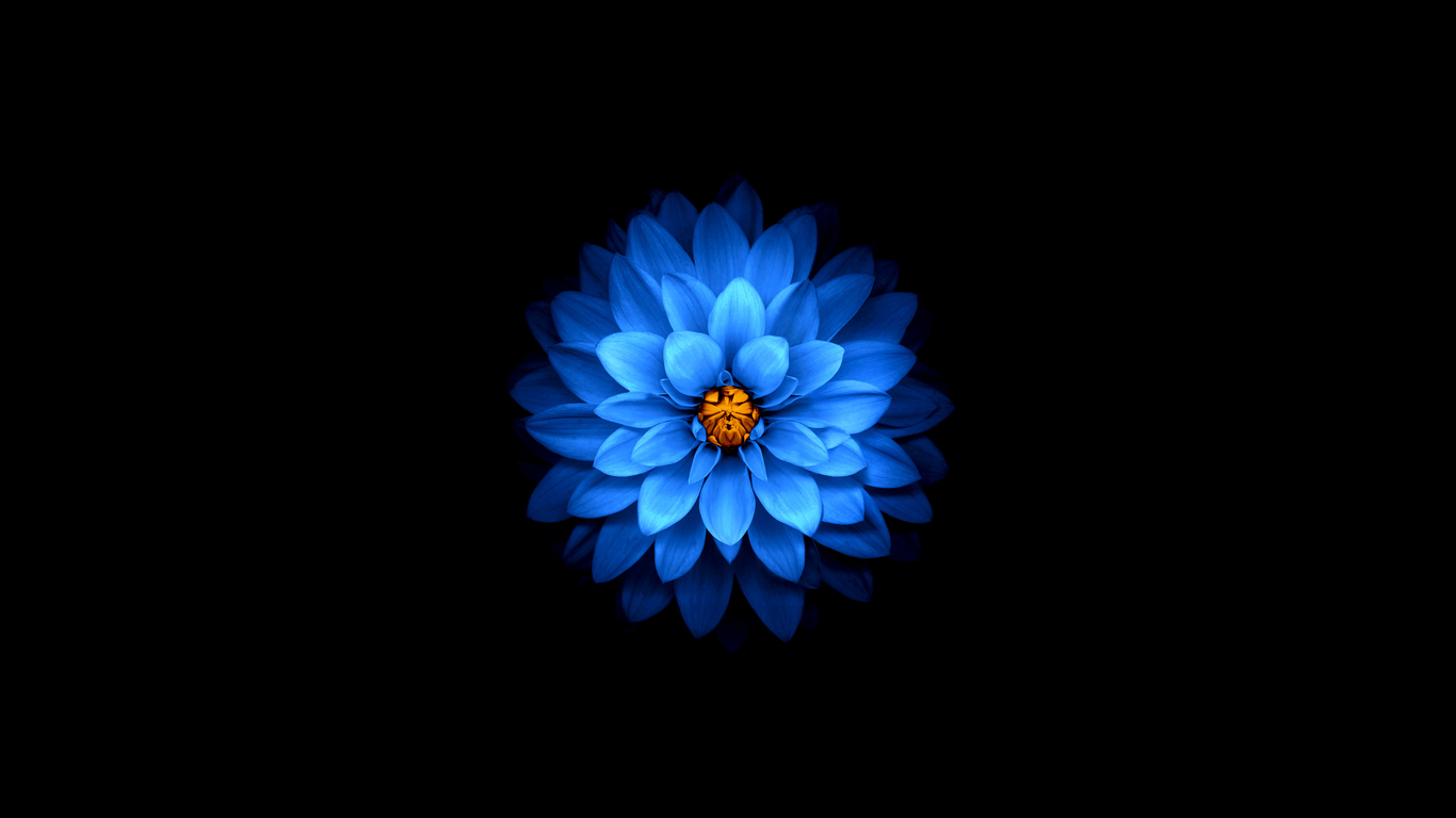 1366x768 apple logo flower - photo #31