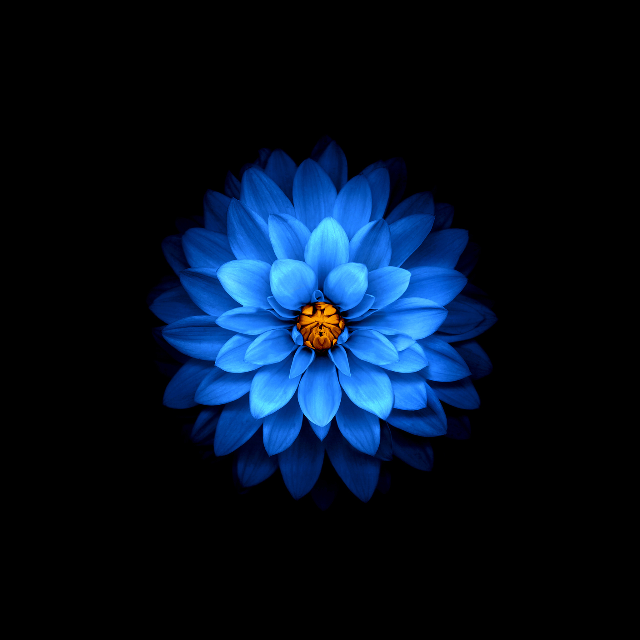 2048x2048 Flower Mod Ipad Air HD 4k Wallpapers, Images