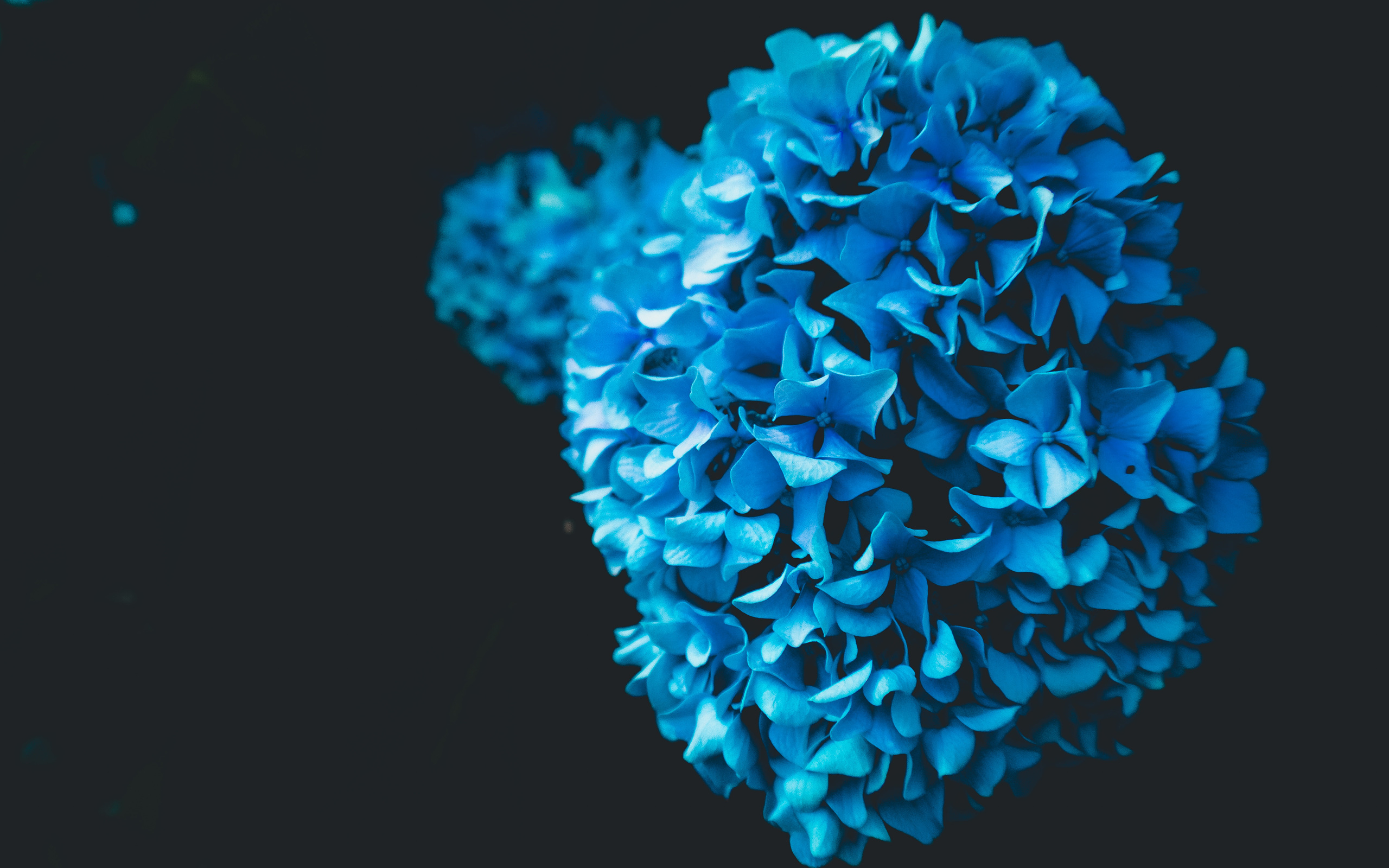flower-oled-iq.jpg