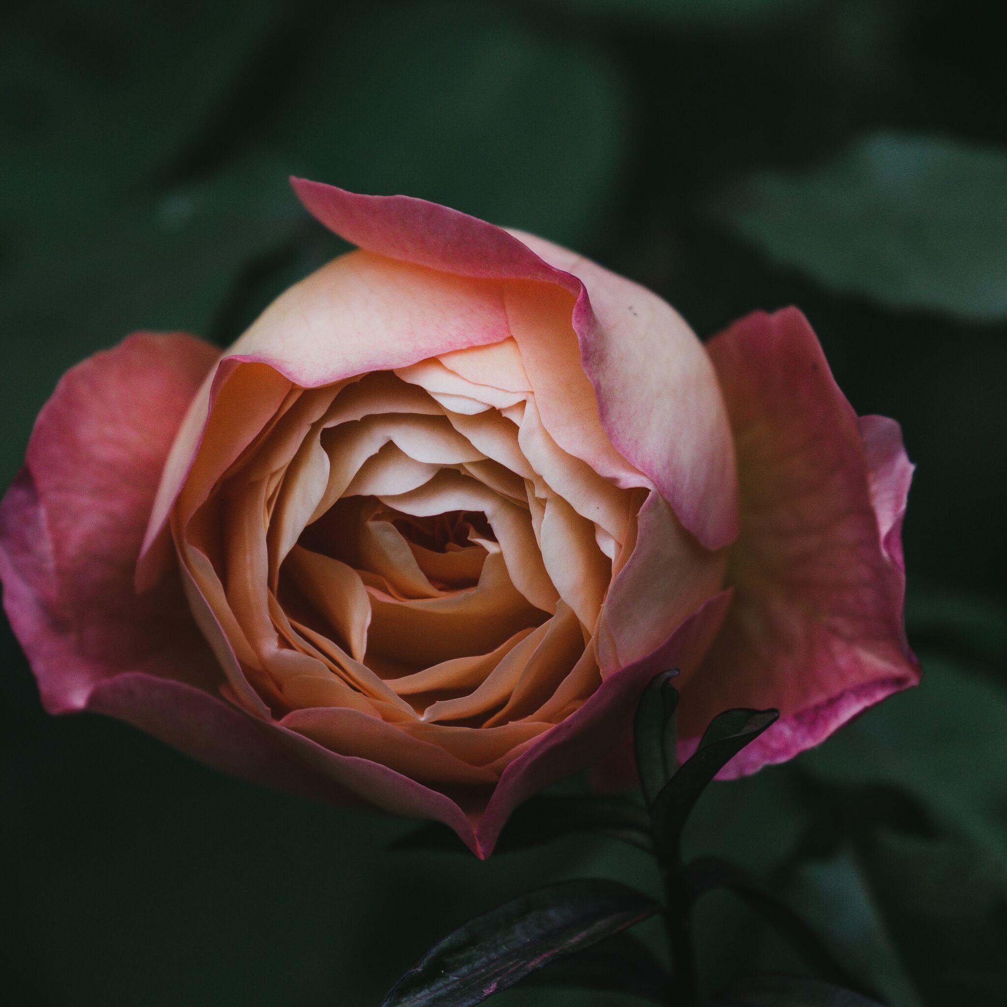 flower-plant-bokeh-blur-5k-90.jpg