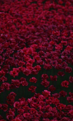 flowers-bed-5k-j4.jpg