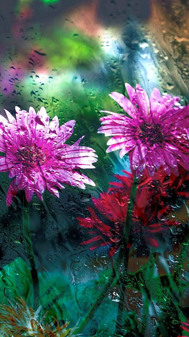 flowers-behind-glass-drops-hd.jpg