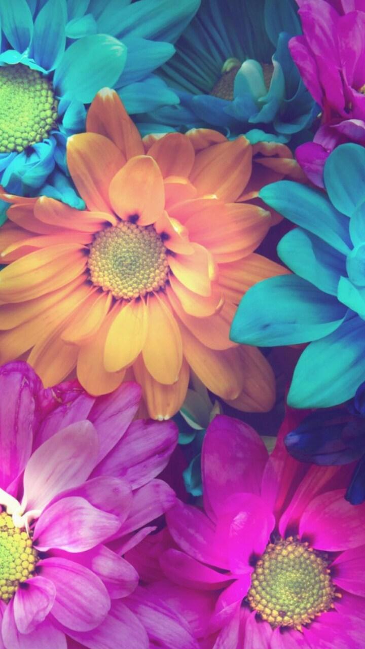 flowers-colorful-petals.jpg