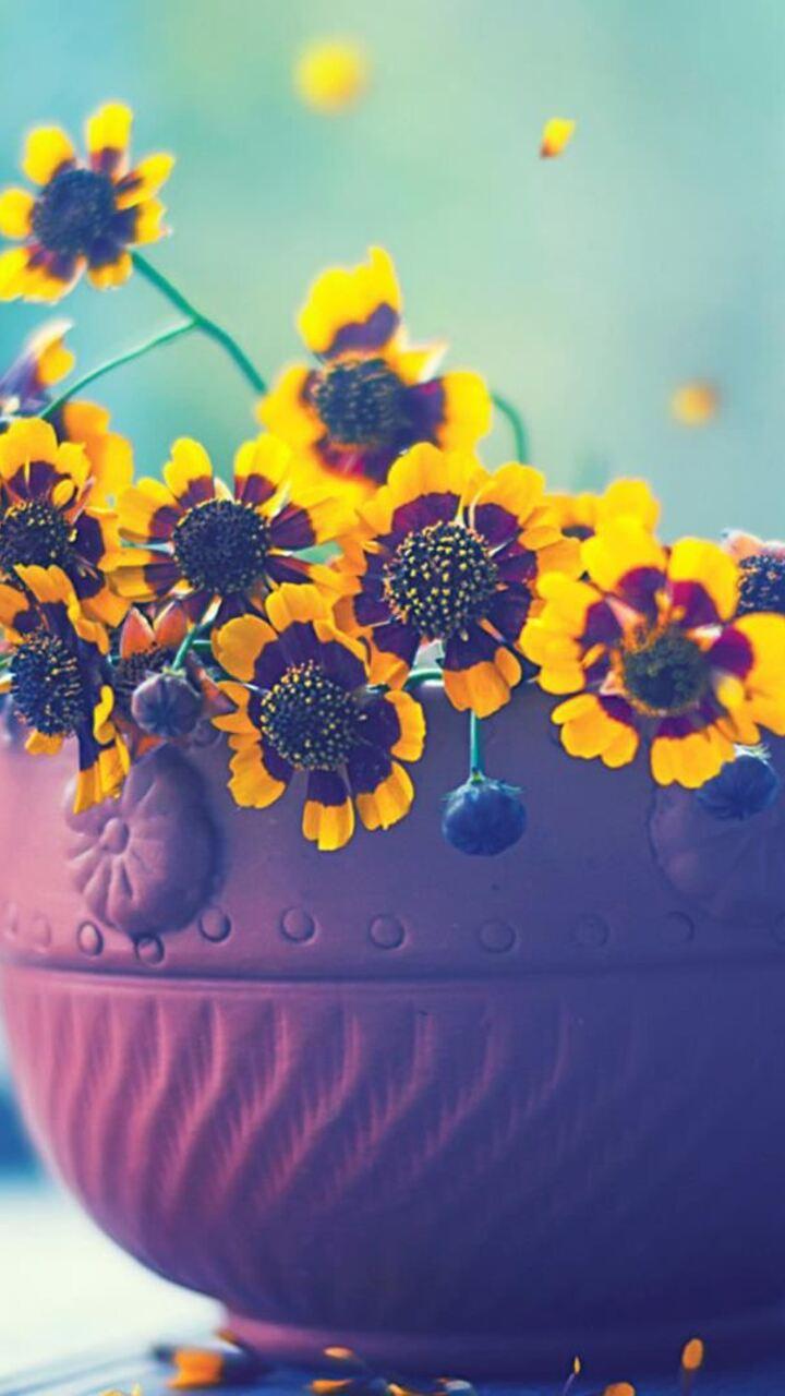 flowers-in-cup-on.jpg