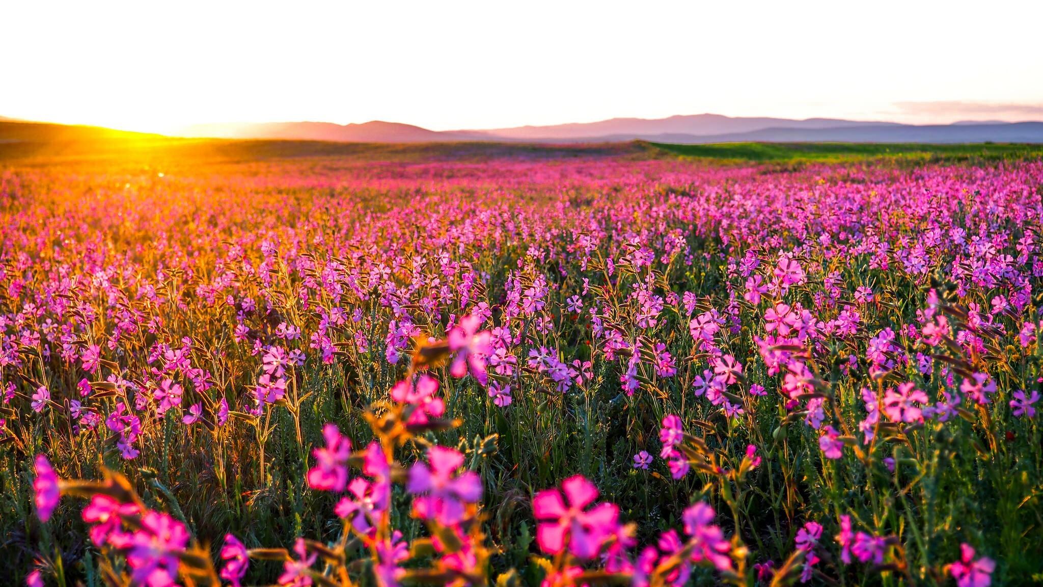 Exceptional Flowers Landscape