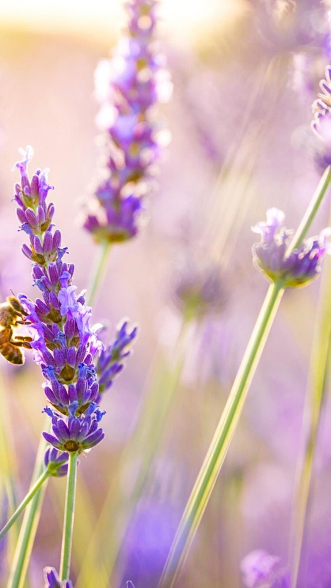 1080x1920 Flowers Lavender Iphone 7,6s,6 Plus, Pixel xl ...