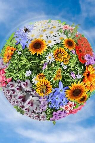 flowers-manipulation-image.jpg