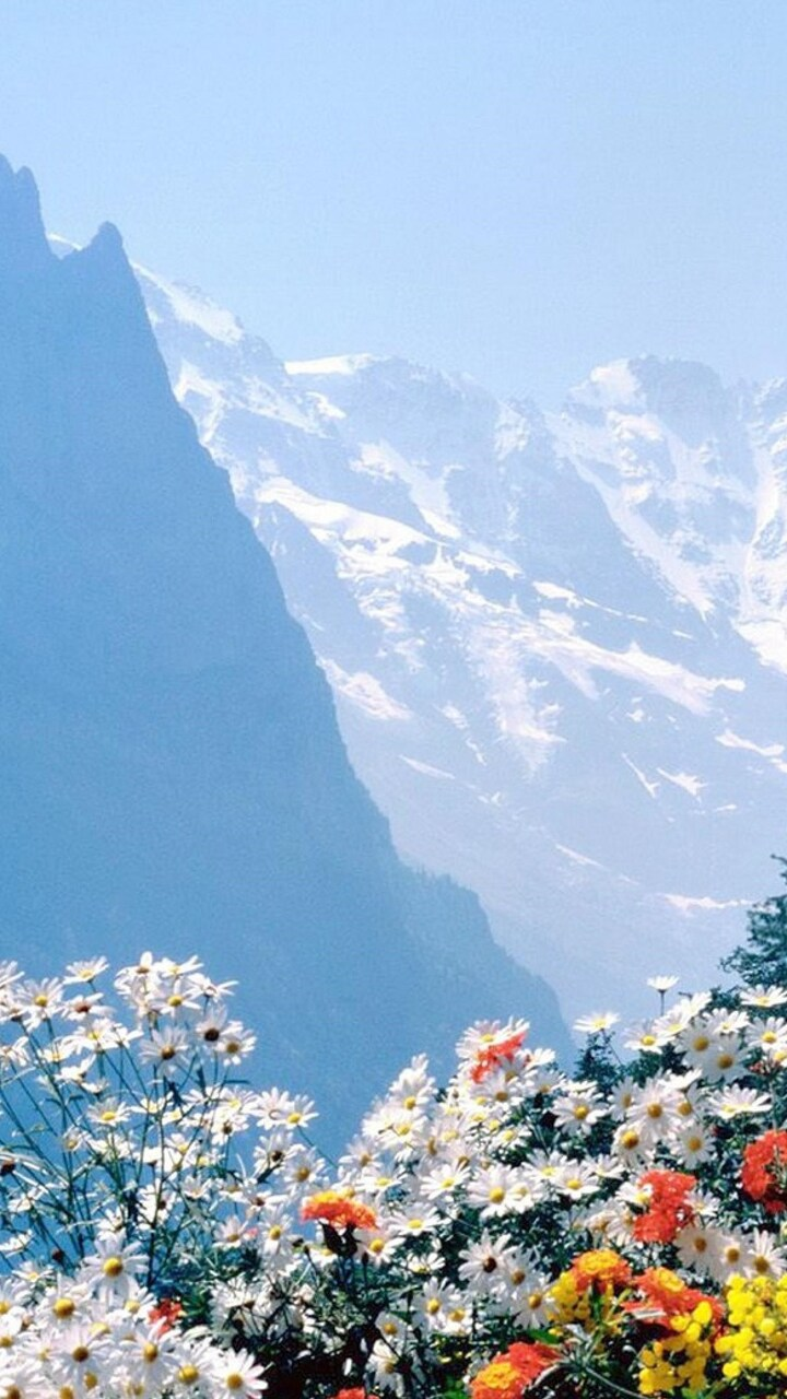 flowers-mountains-cliff.jpg