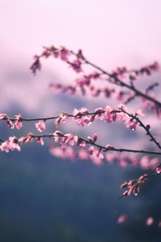 flowers-photography-5k-gd.jpg