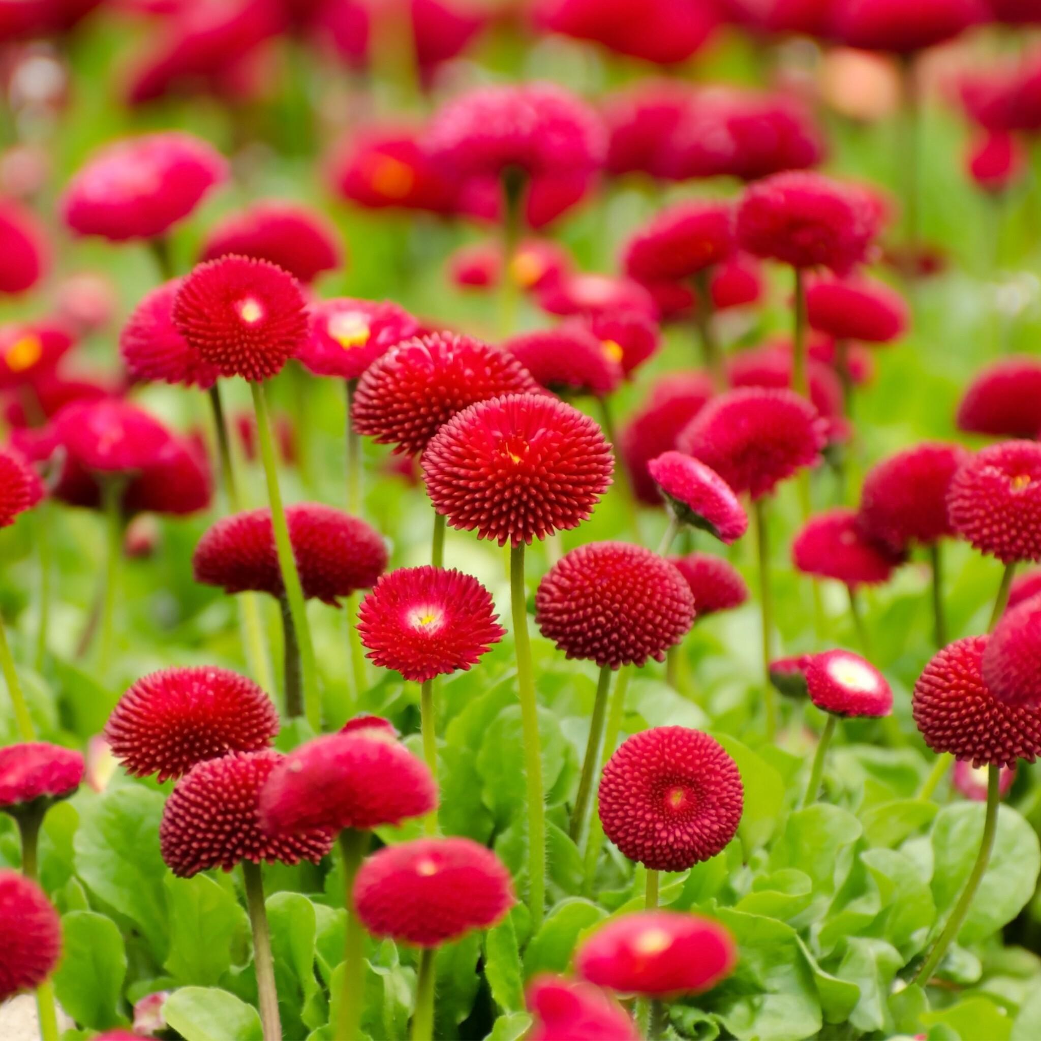 flowers-red-summer.jpg