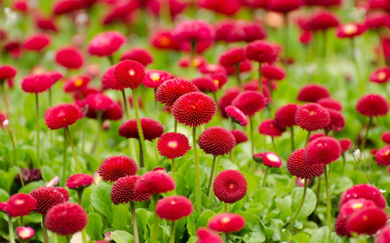 2880x1800 Flowers Red Summer Macbook Pro Retina Hd 4k Wallpapers