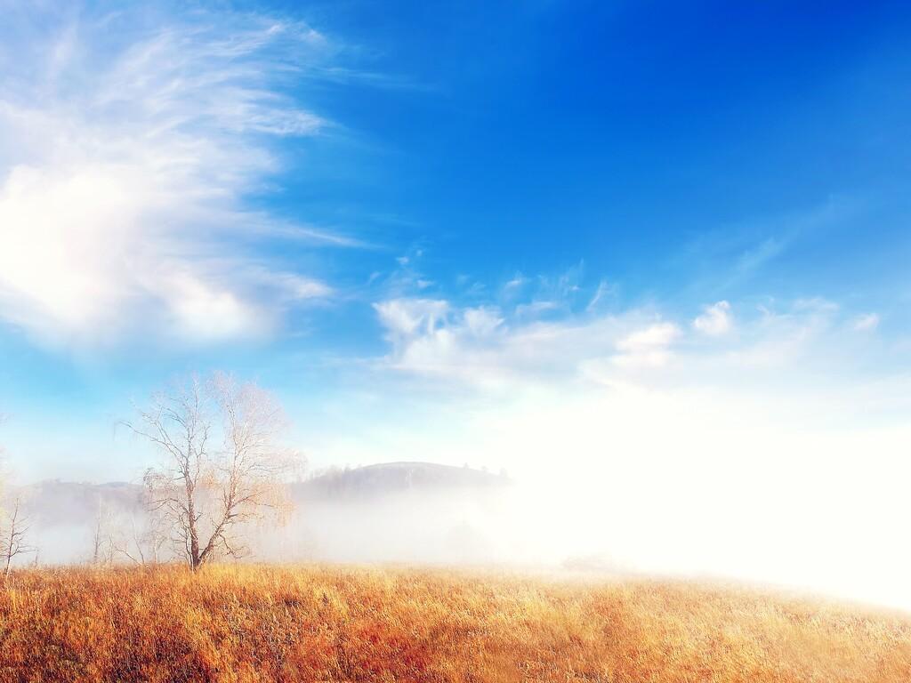 fog-trees-cloud.jpg