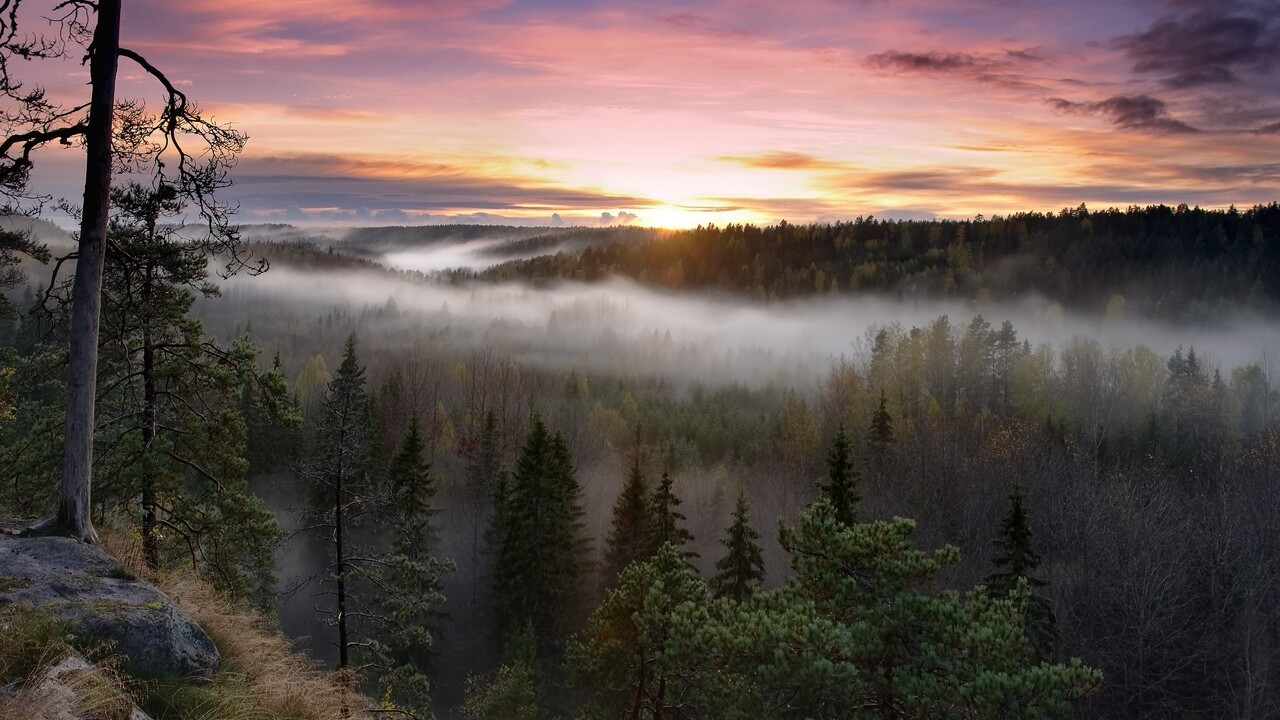 foggy-sunrise-national-park.jpg
