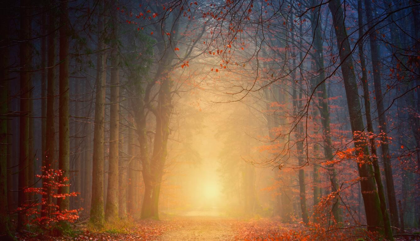 forest-autumn-5k-97.jpg