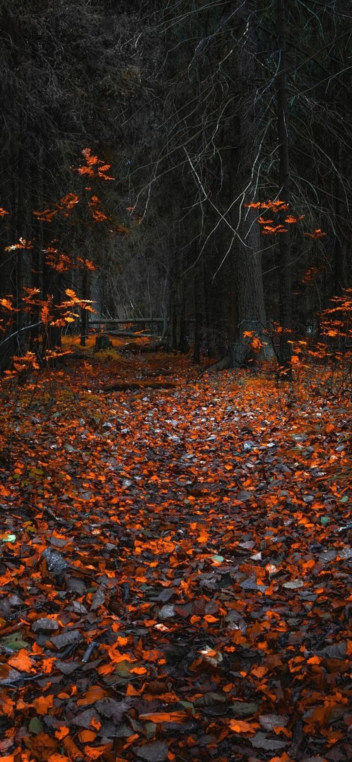 1125x2436 Forest Fall Leaf Iphone Xs Iphone 10 Iphone X Hd