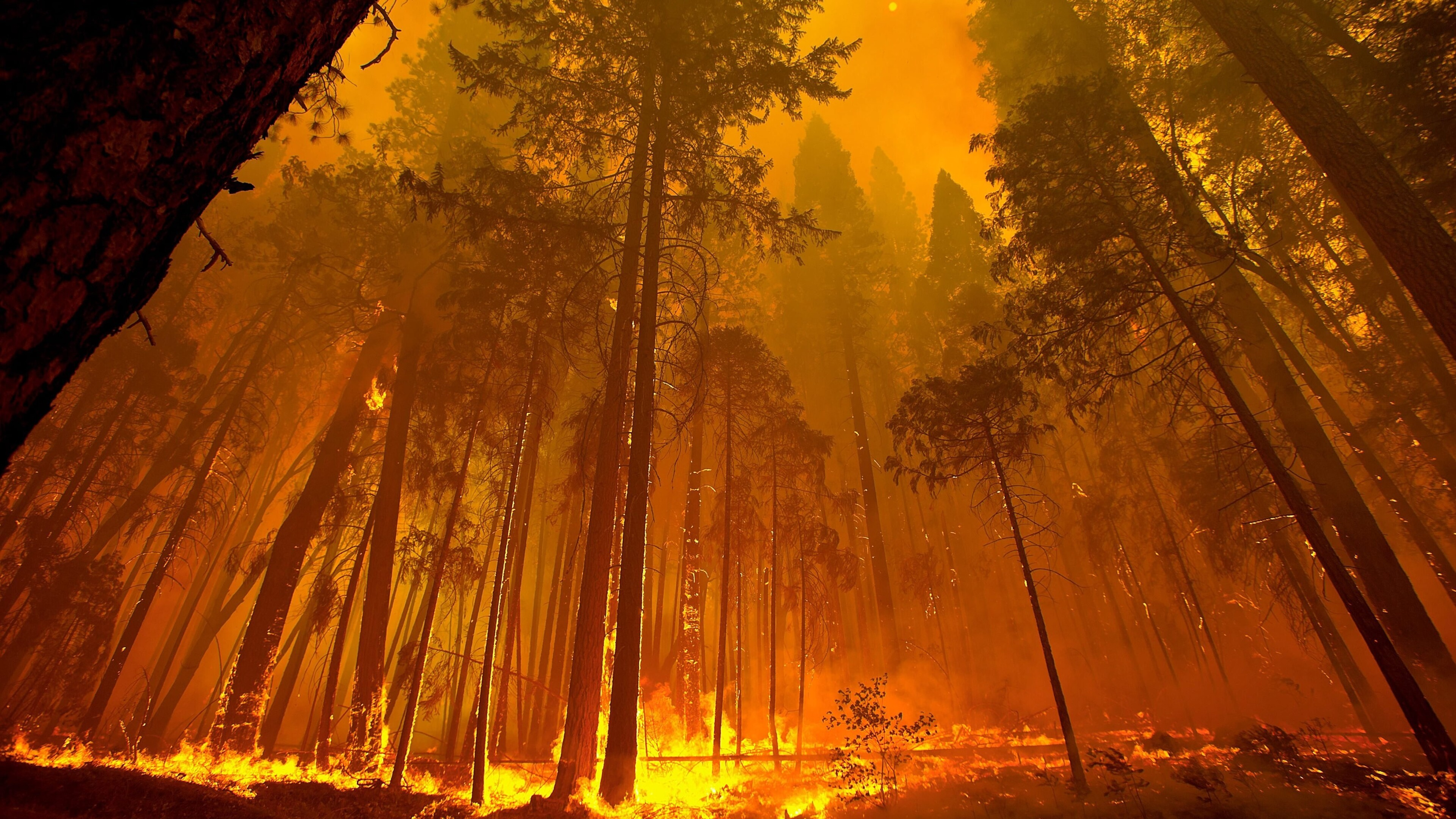 3840x2160 Forest Fire 4k 4k HD 4k Wallpapers, Images ...