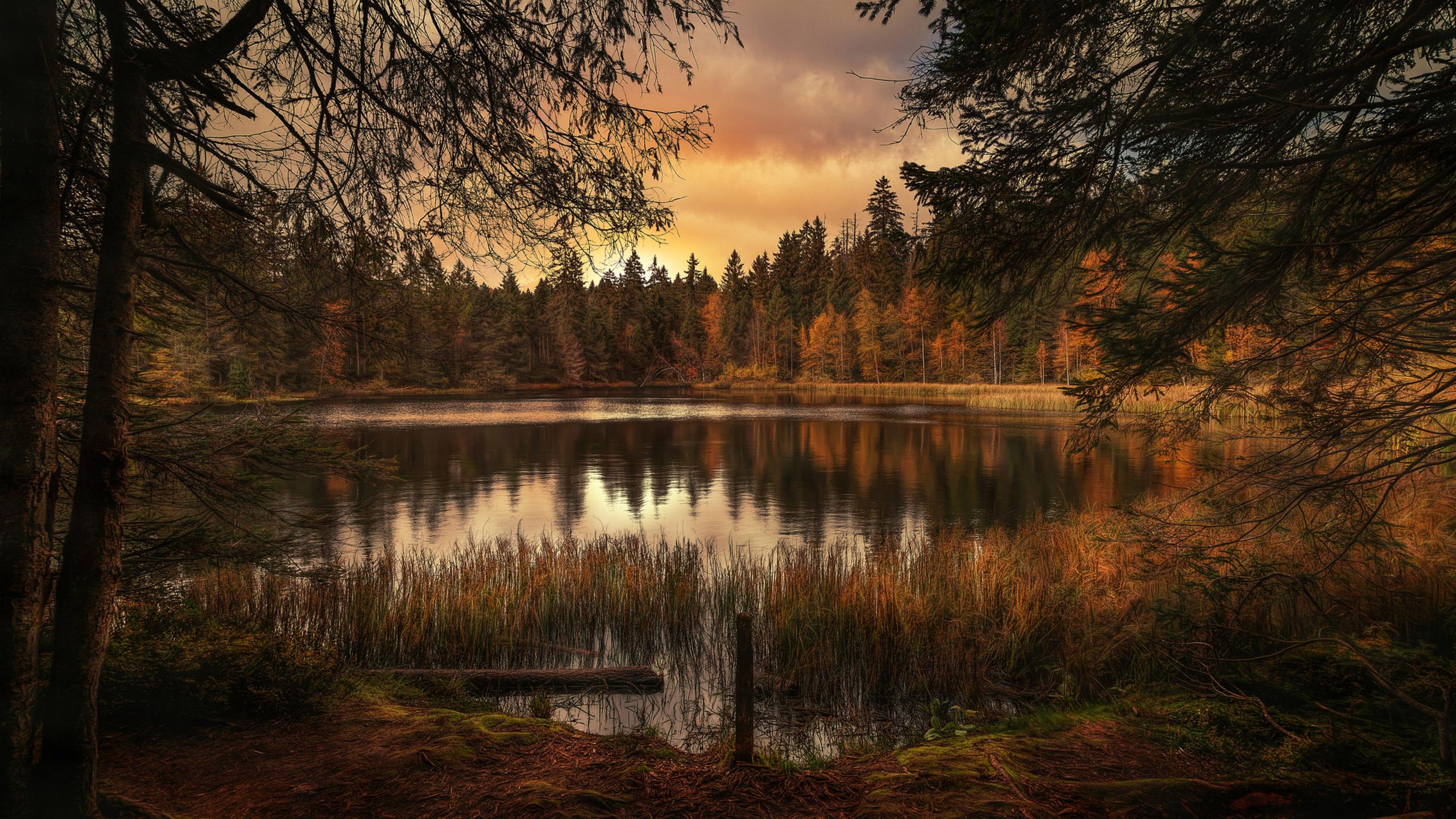 2560x1440 Forest Lake Landscape 1440P Resolution HD 4k ...