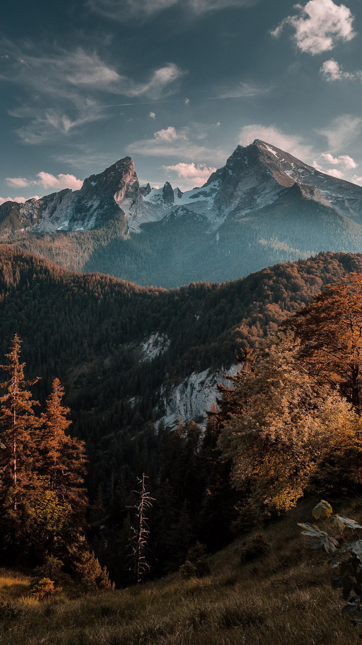 forest-mountains-3v.jpg