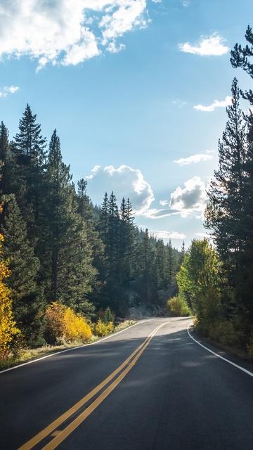 forest-road-asphalt-landscape-5k-i9.jpg