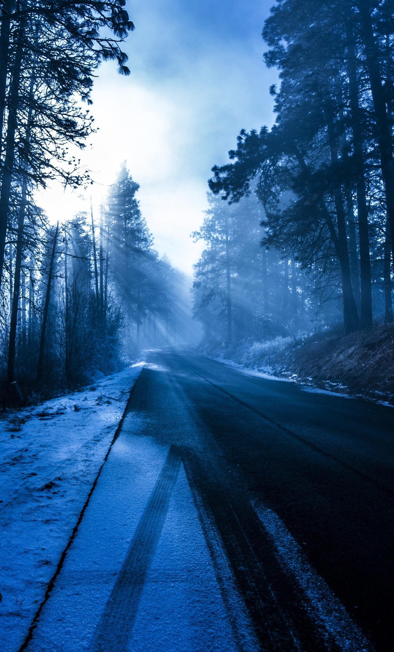 forest-snowy-dark-evening-5k-28.jpg