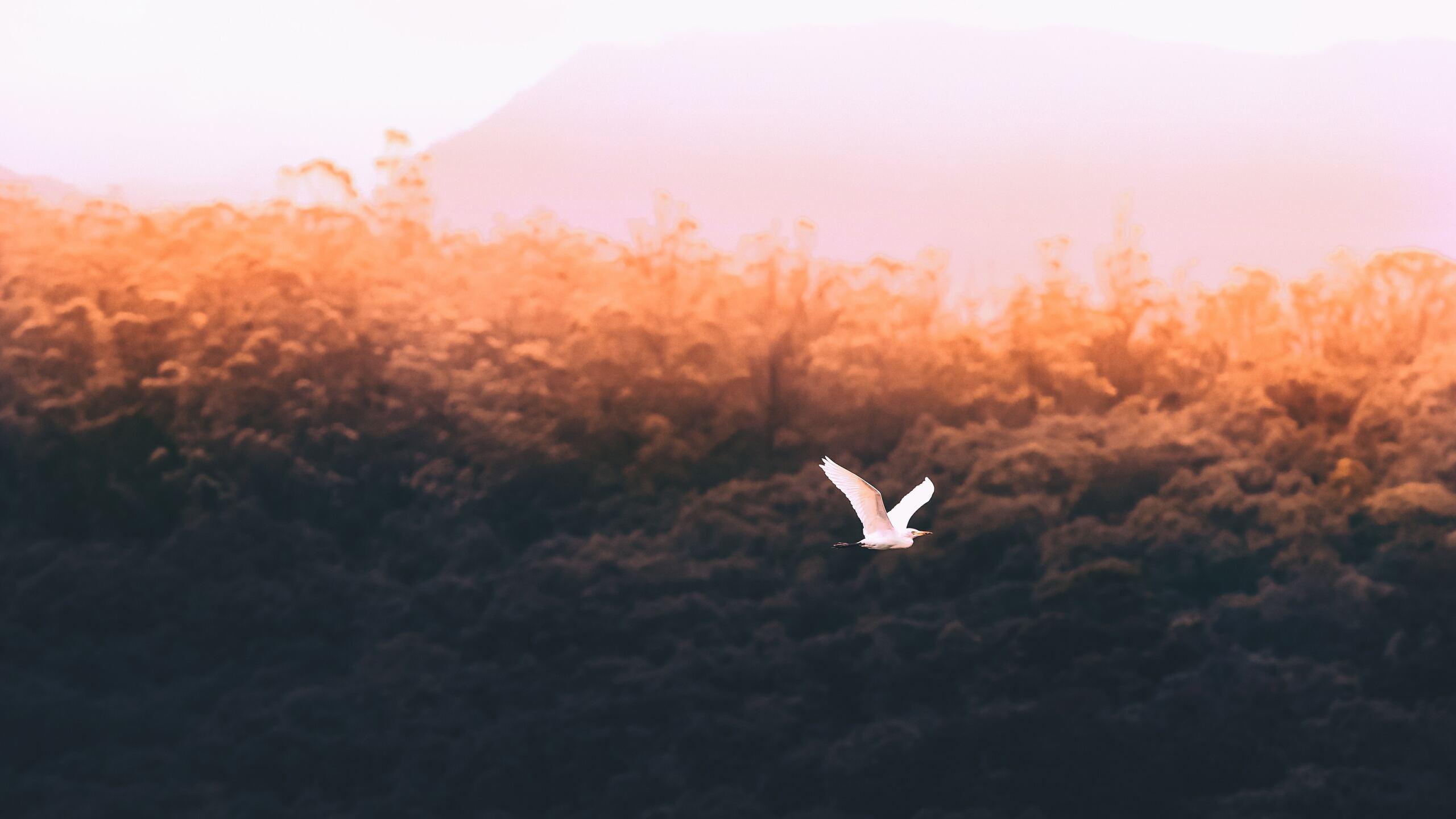 forest-sould-bird-flying-5k-vz.jpg