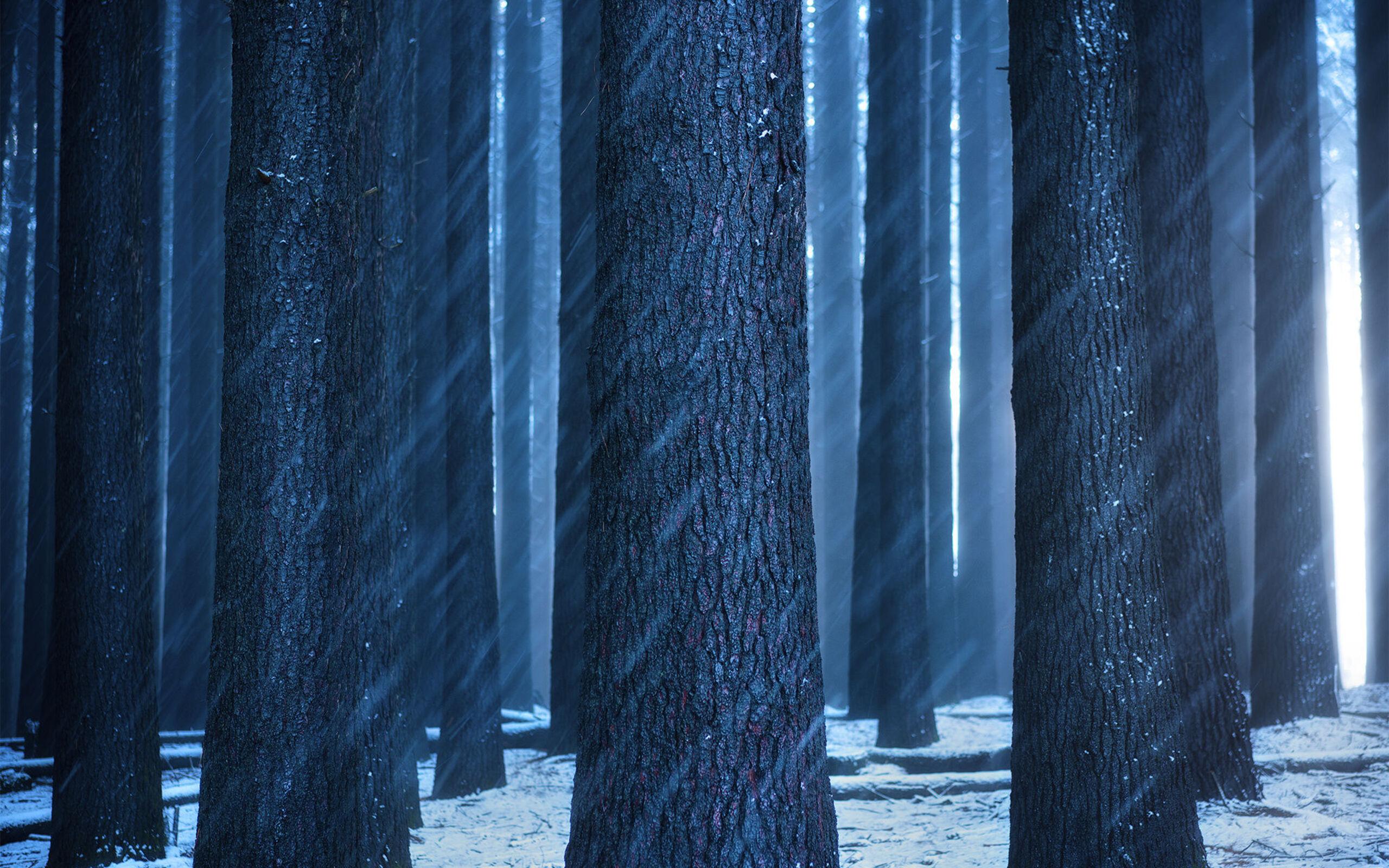 forest-sunbeam-image.jpg