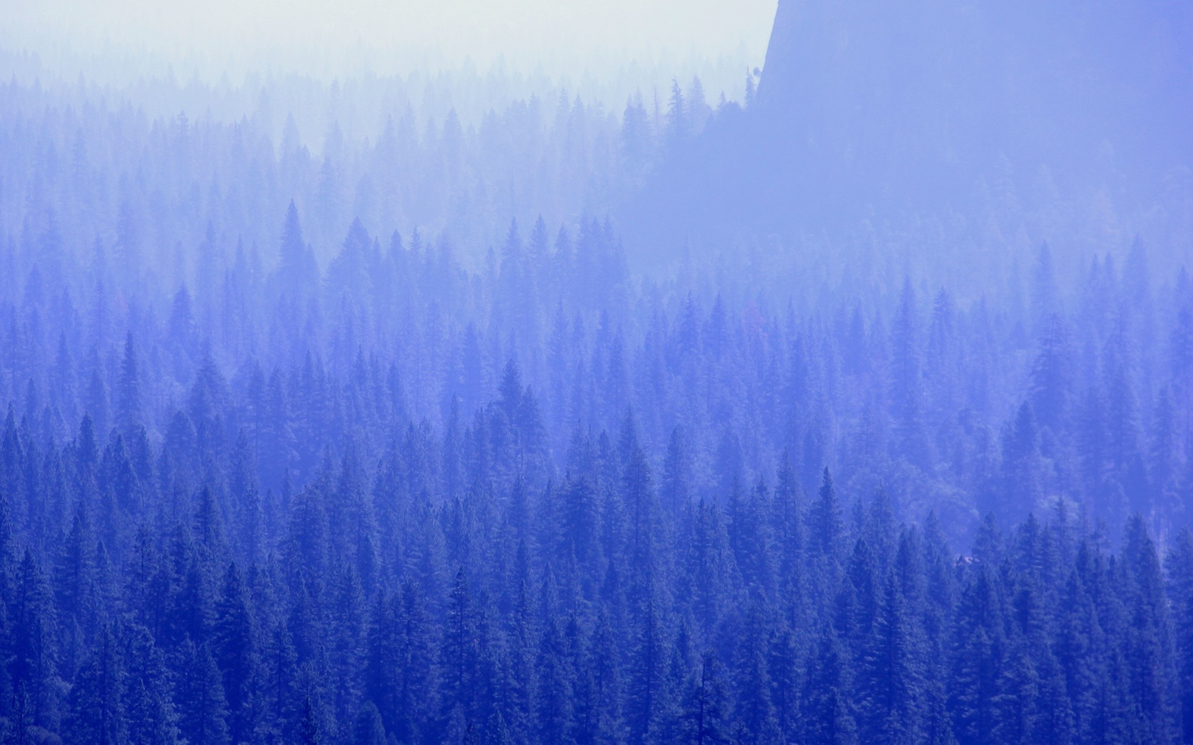 forest-trees-blue-tone-5k-be.jpg