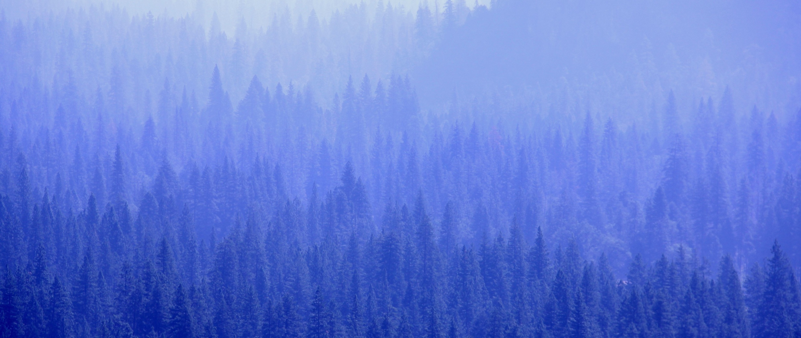 2560x1080 Forest Trees Blue Tone 5k 2560x1080 Resolution Hd 4k Wallpapers Images Backgrounds Photos And Pictures